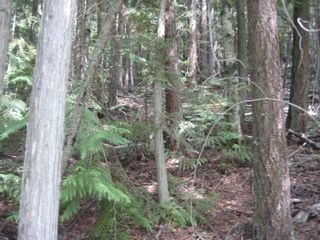 Photo 6: Lot 23 Vickers Trail in Anglemont: Land Only for sale : MLS®# 10011652