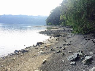 Photo 16: DL-130 Trans Canada Hwy in : ML Malahat Proper Land for sale (Malahat & Area)  : MLS®# 877733