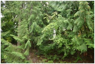 Photo 11: Lot 49 Forest Drive: Blind Bay Vacant Land for sale (Shuswap Lake)  : MLS®# 10217653