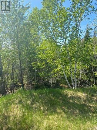 Photo 8: 74.62 Acres Route 127 in Bayside: Vacant Land for sale : MLS®# NB058351