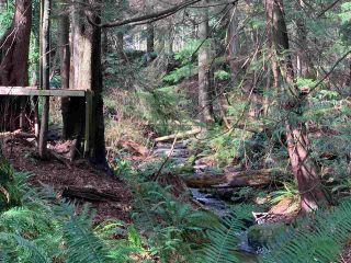 Photo 21: 5852 MARINE Way in Sechelt: Sechelt District Land for sale (Sunshine Coast)  : MLS®# R2545877