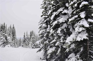 """Photo 5: 217 PRAIRIE Road in Smithers: Smithers - Rural Land for sale in """"Hudson Bay Mountain Resort"""" (Smithers And Area (Zone 54))  : MLS®# R2545464"""