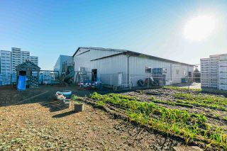 Photo 10: 190 DEFEHR Road in Abbotsford: Aberdeen Agri-Business for sale : MLS®# C8036607