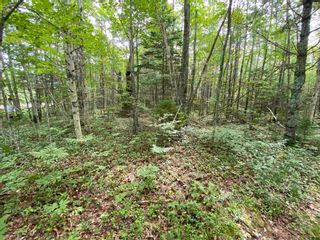 Photo 3: Lot 103 Highway in East Port L'Hebert: 406-Queens County Vacant Land for sale (South Shore)  : MLS®# 202115875