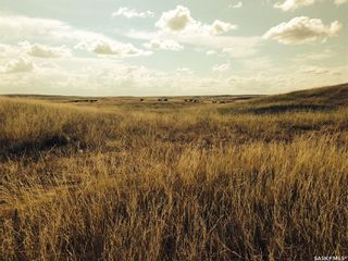 Photo 12: Diamond D Land and Cattle Ltd. in Lacadena: Farm for sale (Lacadena Rm No. 228)  : MLS®# SK833271