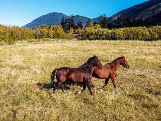 Photo 10: 1492 PAVILION CLINTON ROAD: Clinton Farm for sale (North West)  : MLS®# 164452