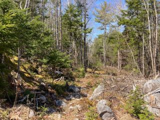 Photo 5: 65 Eaglet Lane in Musquodoboit Harbour: 35-Halifax County East Vacant Land for sale (Halifax-Dartmouth)  : MLS®# 202109854