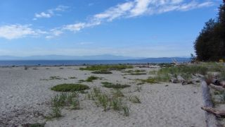 Photo 14: 226 HAIRY ELBOW Road in Sechelt: Sechelt District House for sale (Sunshine Coast)  : MLS®# R2137692