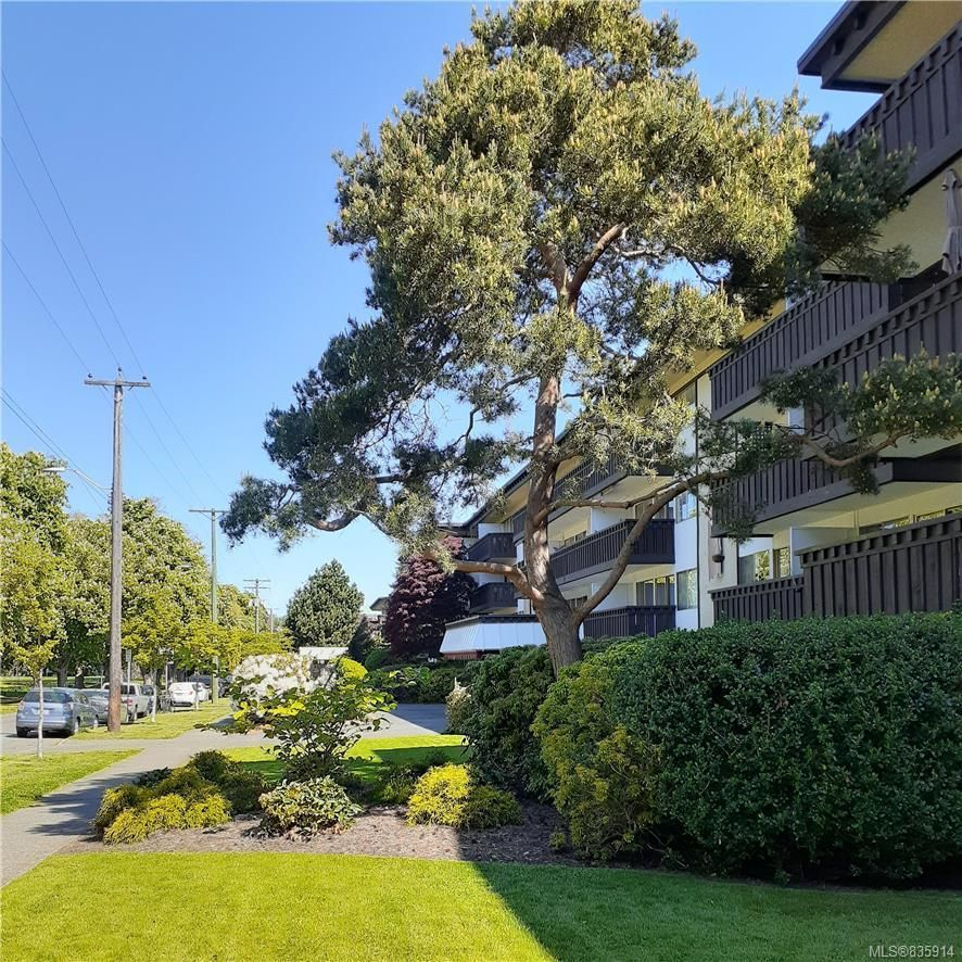 Main Photo: 119 964 Heywood Ave in Victoria: Vi Fairfield West Condo for sale : MLS®# 835914