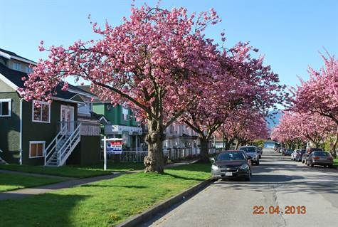 Main Photo: 4769 BRUCE ST in Vancouver: Victoria VE House for sale (Vancouver East)  : MLS®# V1000138