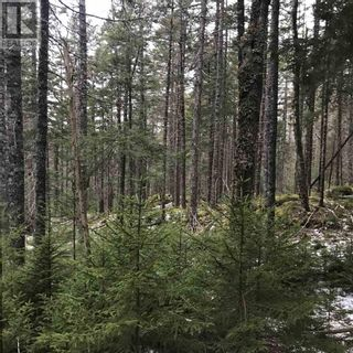 Photo 7: Lot 14 Tupper Lake in Westfield: Vacant Land for sale : MLS®# 202110832