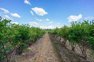 Photo 15: 21.44AC 240 STREET in Langley: Langley City Agri-Business for sale : MLS®# C8038637
