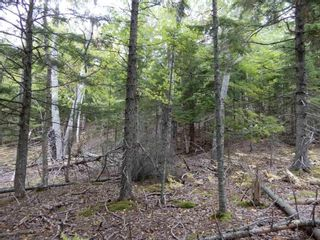 Photo 13: Tanner Hill Road in Limerock: 108-Rural Pictou County Vacant Land for sale (Northern Region)  : MLS®# 202121301