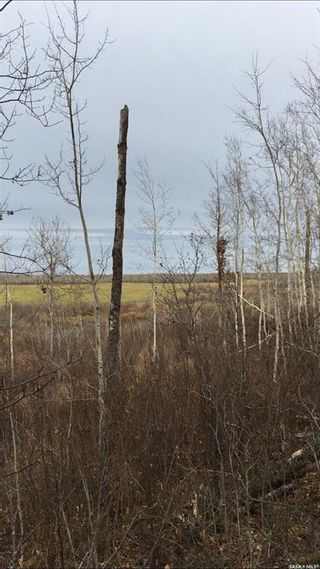 Photo 5: Acreage-Adjacent to South Bay, Turtle Lake in Turtle Lake: Lot/Land for sale : MLS®# SK858448