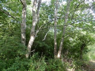 Photo 7: Salem Road in Greenhill: 108-Rural Pictou County Vacant Land for sale (Northern Region)  : MLS®# 202121181