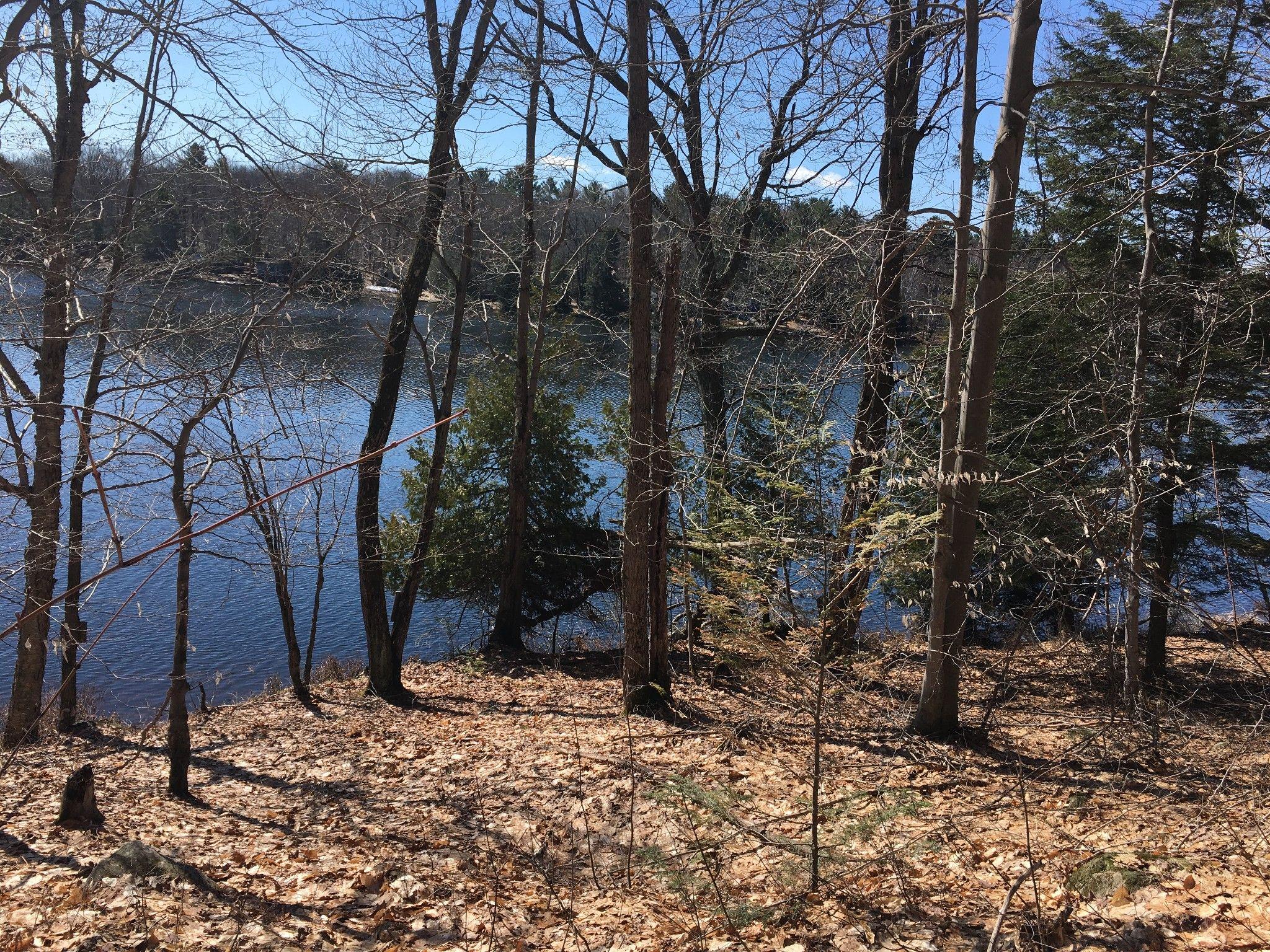 Spring views of lake