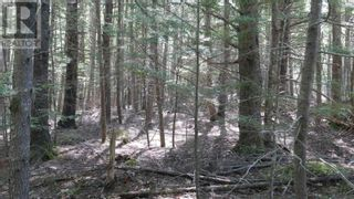 Photo 5: Lot 9 Madashak Road in Middle New Cornwall: Vacant Land for sale : MLS®# 202113818
