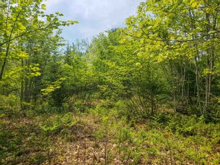 Photo 9: Lot 101 Dorey Mills Road in Clearland: 405-Lunenburg County Vacant Land for sale (South Shore)  : MLS®# 202119645