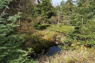 Photo 8: 7735 Highway 35 Road in Kawartha Lakes: Rural Laxton House (Bungalow) for sale : MLS®# X2811822