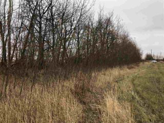 Photo 5: TWP RD 583 Range Rd 271: Rural Westlock County Rural Land/Vacant Lot for sale : MLS®# E4218433