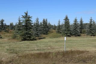 Photo 12: Hwy 622 RR 15: Rural Leduc County Rural Land/Vacant Lot for sale : MLS®# E4261453