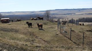 Photo 12: SE 35-20-2W5: Rural Foothills County Residential Land for sale : MLS®# A1101395