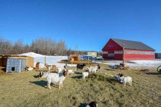 Photo 12: 13652 217 Road in Fort St. John: Fort St. John - Rural E 100th Manufactured Home for sale (Fort St. John (Zone 60))  : MLS®# R2350184