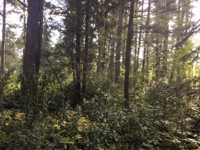 Photo 6: Photos: LOT 4 VALHALLA Road in Quesnel: Quesnel - Town Land for sale (Quesnel (Zone 28))  : MLS®# R2491850