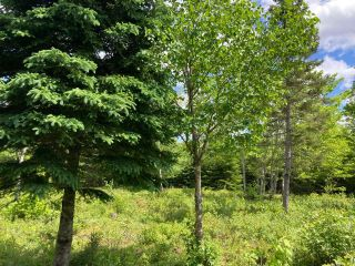 Photo 14: Lot 29 Anderson Drive in Sherbrooke: 303-Guysborough County Vacant Land for sale (Highland Region)  : MLS®# 202115631
