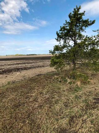 Photo 13: RR 255 & HWY 37: Rural Sturgeon County Rural Land/Vacant Lot for sale : MLS®# E4244134