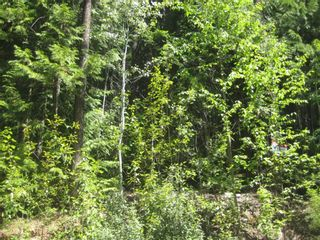 Photo 4: Lot 23 Vickers Trail in Anglemont: Land Only for sale : MLS®# 10011652