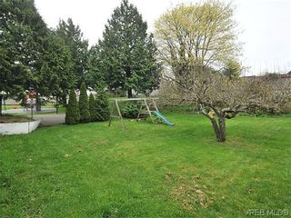 Photo 16: 3167 Carroll St in VICTORIA: Vi Burnside House for sale (Victoria)  : MLS®# 636095