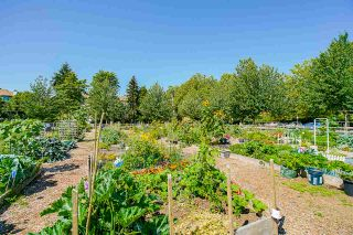 """Photo 35: 104 20125 55A Avenue in Langley: Langley City Condo for sale in """"Blackberry II"""" : MLS®# R2484759"""