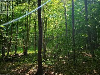Photo 16: 8801 SEVERN RIVER in Orillia: Vacant Land for sale : MLS®# 40120545