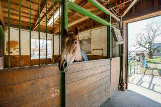 Photo 20: 1280 POWERHOUSE Road in Abbotsford: Sumas Prairie House for sale : MLS®# R2565055