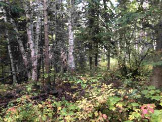 """Photo 16: DL 1599 W 16 Highway in Prince George: Lafreniere Land for sale in """"LAFRENIERE"""" (PG City South (Zone 74))  : MLS®# R2508129"""