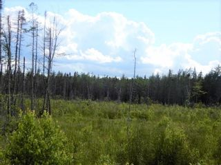 Photo 7: Battist Road in Sundridge: 108-Rural Pictou County Vacant Land for sale (Northern Region)  : MLS®# 202119320