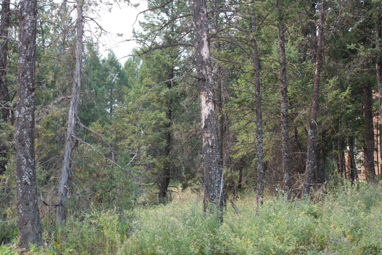 Main Photo: Lot 50 COPPER POINT WAY in Windermere: Vacant Land for sale : MLS®# 2460137