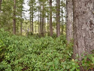 Photo 42: W1/2 SW&NW1/4 Quatsino Sound in : NI Port Hardy Land for sale (North Island)  : MLS®# 866764