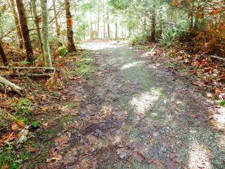 Photo 8: 6151 HARBOUR Way in Sechelt: Sechelt District Land for sale (Sunshine Coast)  : MLS®# R2530969