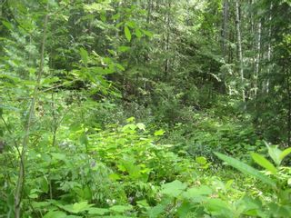 Photo 7: 12 Stampede Trail in Anglemont: Land Only for sale : MLS®# 10031134