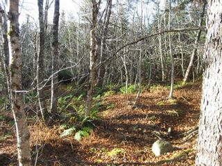 Photo 4: Lot Highway 107 in West Petpeswick: 35-Halifax County East Vacant Land for sale (Halifax-Dartmouth)  : MLS®# 202114068