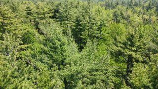 Photo 6: Lot Highway 203 in Shelburne: 407-Shelburne County Vacant Land for sale (South Shore)  : MLS®# 202114248