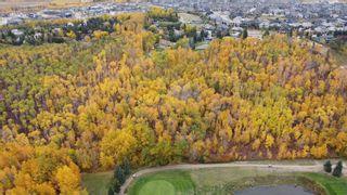 Photo 4: 17303 23 Avenue NW: Edmonton Commercial Land for sale : MLS®# A1153359