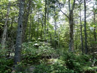 Photo 28: 299 New Lairg Road in New Lairg: 108-Rural Pictou County Vacant Land for sale (Northern Region)  : MLS®# 202117815