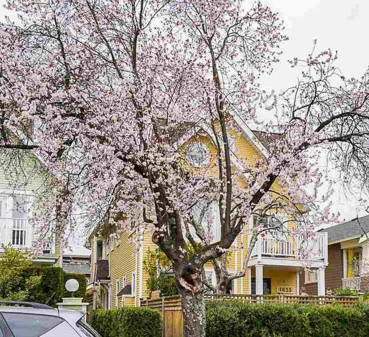 Main Photo: 1837 CREELMAN Avenue in Vancouver: Kitsilano 1/2 Duplex for sale (Vancouver West)  : MLS®# R2554606