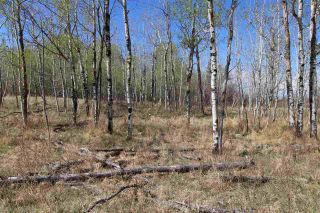 Photo 17: 57032 RR 50: Rural Lac Ste. Anne County Rural Land/Vacant Lot for sale : MLS®# E4244016