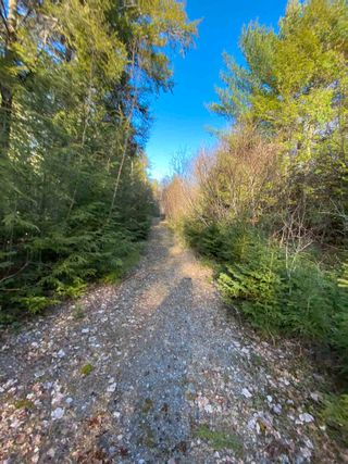 Photo 17: Saunders Road in Durham: 108-Rural Pictou County Vacant Land for sale (Northern Region)  : MLS®# 202108674