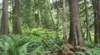 Photo 11: 14.65AC BARRETT STREET in Mission: Mission BC Land for sale : MLS®# R2079511