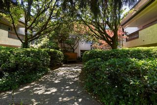 """Photo 10: 108 809 W 16TH Street in North Vancouver: Hamilton Condo for sale in """"PANORAMA COURT"""" : MLS®# R2066824"""